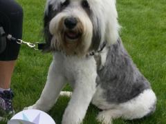 Greta the dog